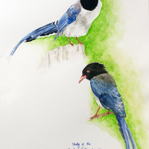 Study of the Birds