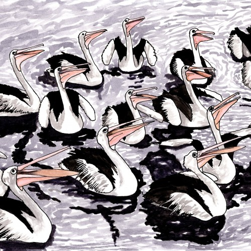 Pelican Choir