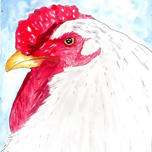 Inktober 5 Chicken
