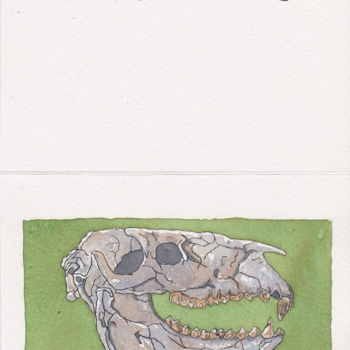 Fossil skull greeting card.
