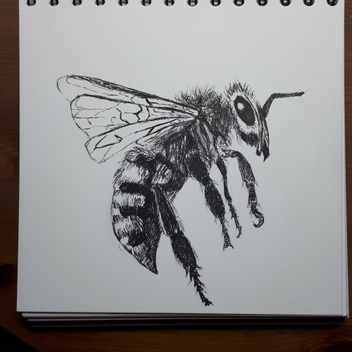 Bee in pen and ink