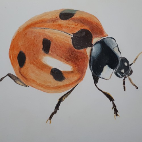 Ladybug in colored pencil.