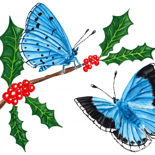 Two Holly Blues