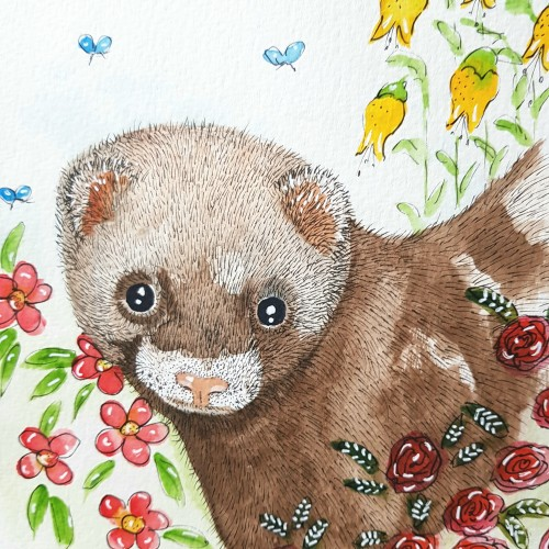Ferret watercolour and ink.