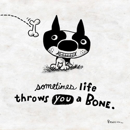 When Life Throws You a Bone