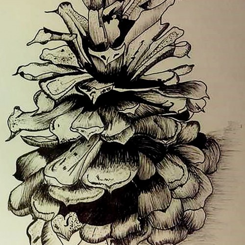 East Texas Pine Cone. Drawing