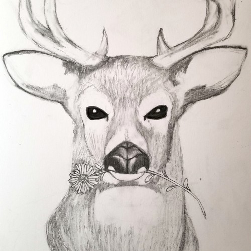 Deer With Meaning