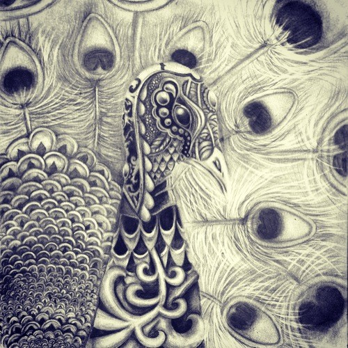 Graphite Peacock Sketchbook Page