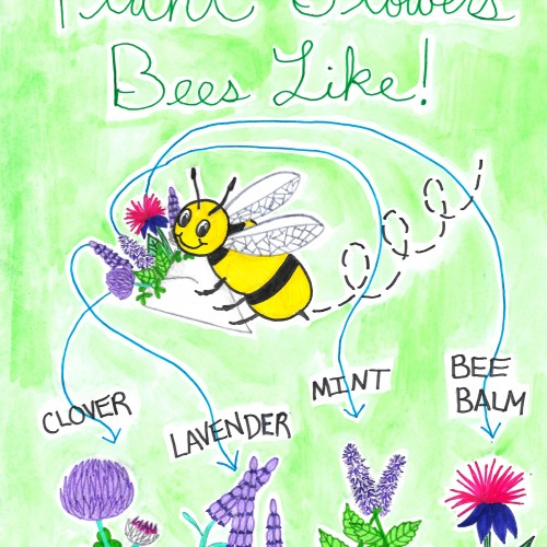 Plant Flowers Bees Like!