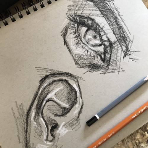 Features: eye, ear | charcoal sketch