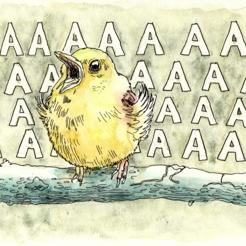 screaming birb