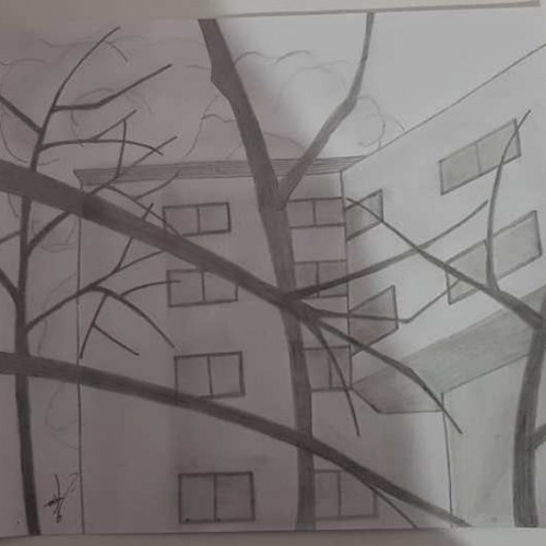 Buildings & Branches- Pencil Drawing