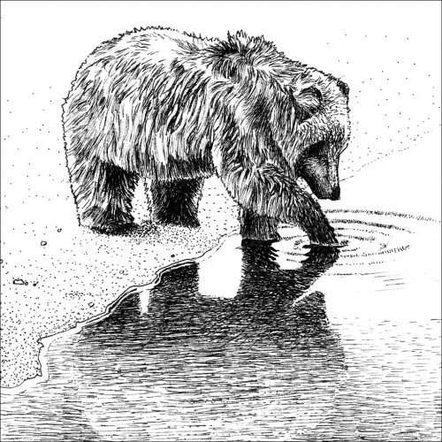 The bear and the water