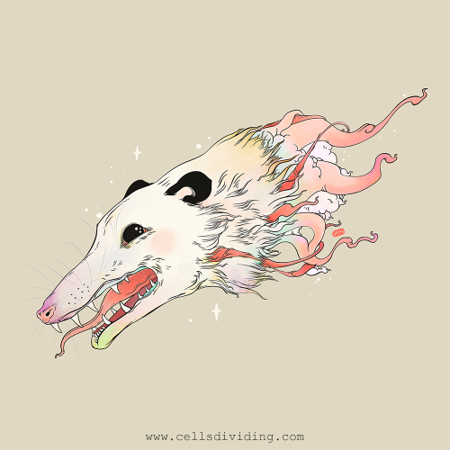 Opossum Illustration