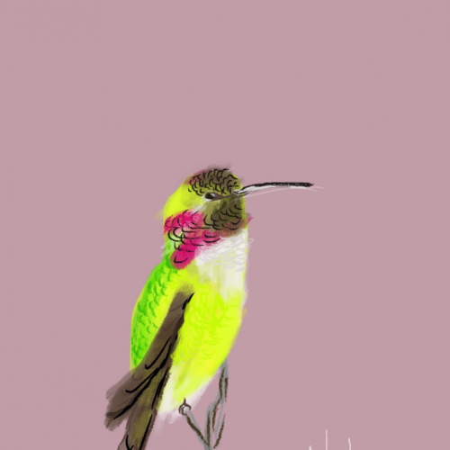 Hummingbird Digital Illustration