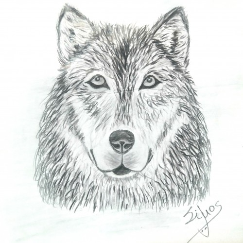 One year drawing challenge / Day 3 / Wolf