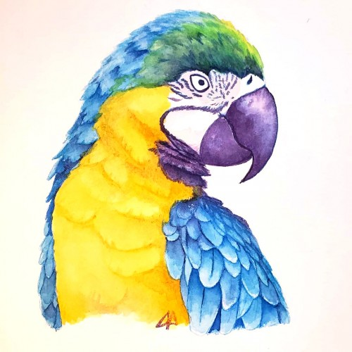 Parrot Study - Colored Ink