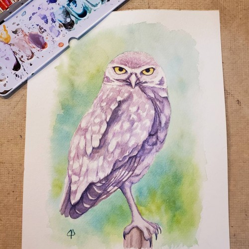 Burrowing Owl Watercolor