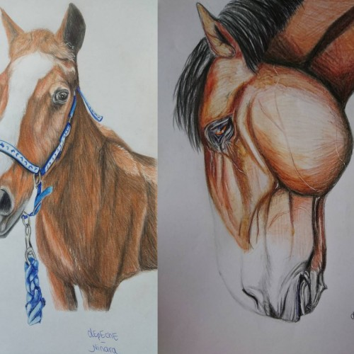 Collage of 2 horse portraits