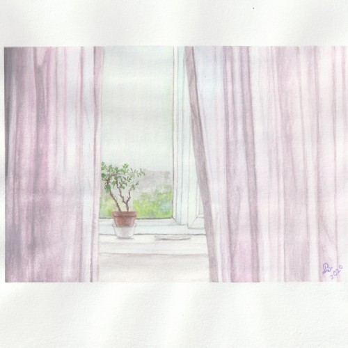 Curtains and potted plant