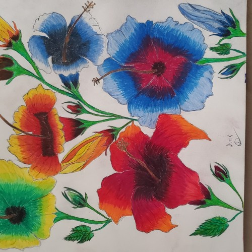 Hibiscus flower in colored pencil