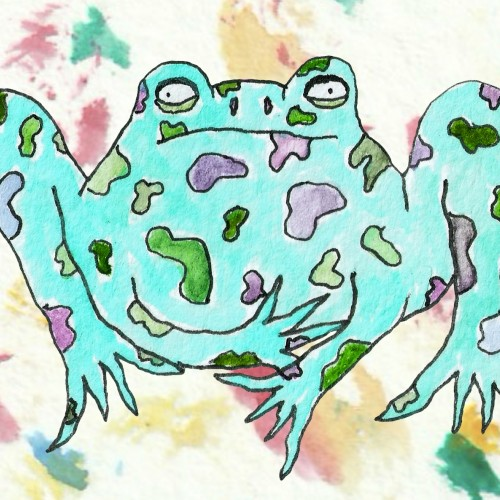 Palette Toad