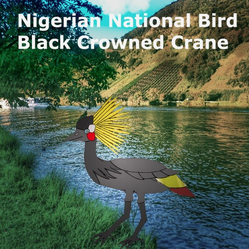 Nigerian National Bird