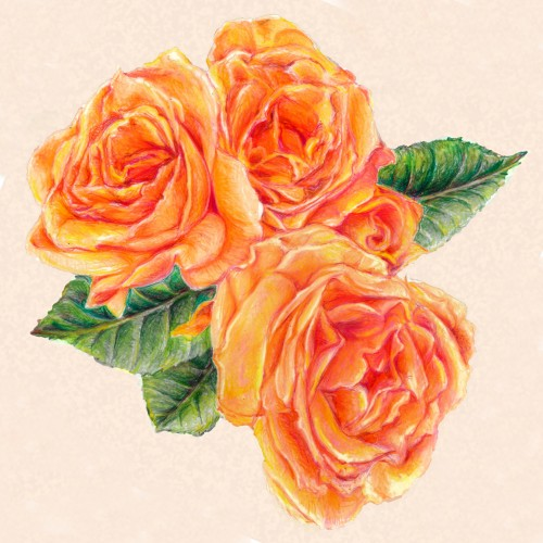 Colored pencil roses