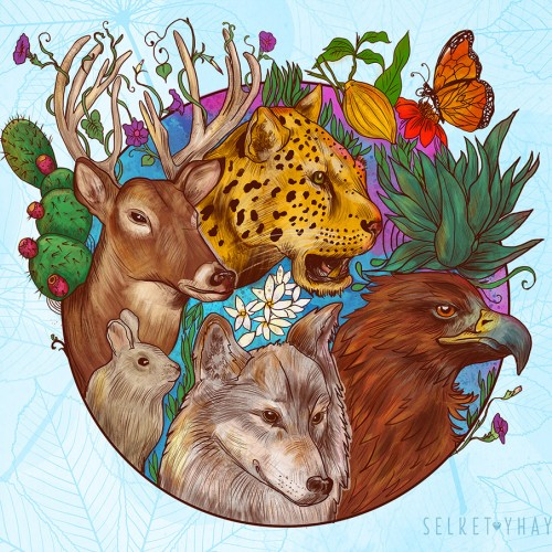 Mexican flora and fauna