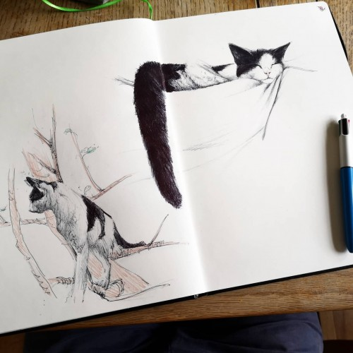 Sketchbook cat