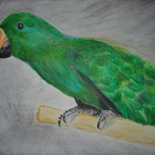Numbo the Eclectus (Inktense on watercolour paper)