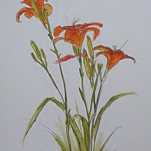 Day Lilies - common and beautiful
