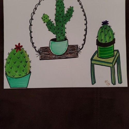 3 Little Cacti