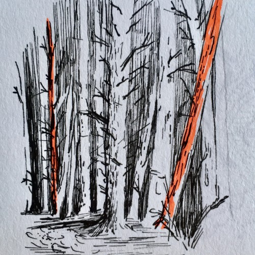 Small forest drawing