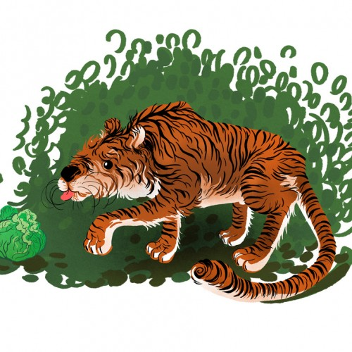 Cabbage eating tiger